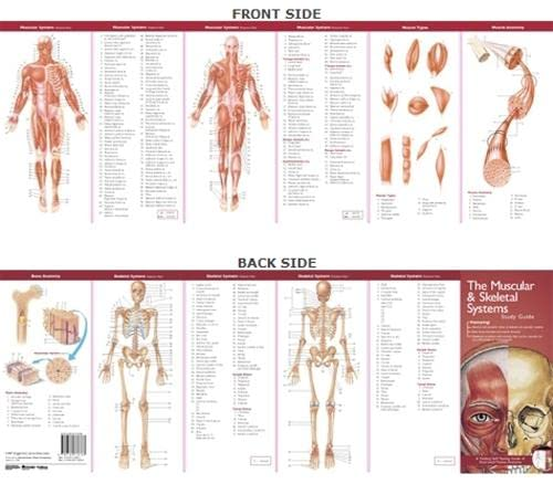Anatomical Chart Company's Illustrated Pocket Anatomy: The Muscular & Skeletal Systems Study Guide
