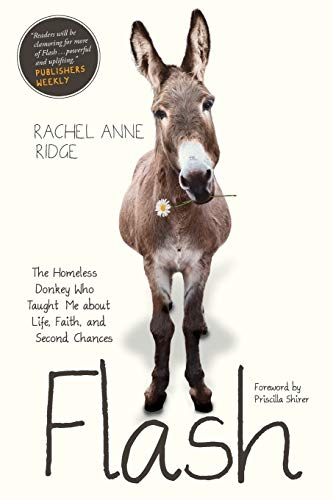 Flash: The Homeless Donkey Who Taught Me About Life, Faith, and Second Chances
