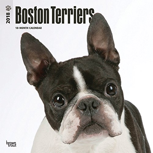 Boston Terriers 2018 Calendar