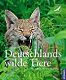 Tiere: Deutschlands wilde Tiere: Wo Adler, Luchs und Biber leben