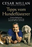 Hunde: Tipps vom Hundeflsterer: Einfache Manahmen fr die gelungene Beziehung zwischen Mensch und Hund