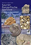 Palontologie: Saurier, Panzerfische und Seelilien: Fossilien aus der Mitte Deutschlands
